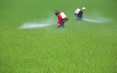 Pesticide exposure found to lower intelligence
