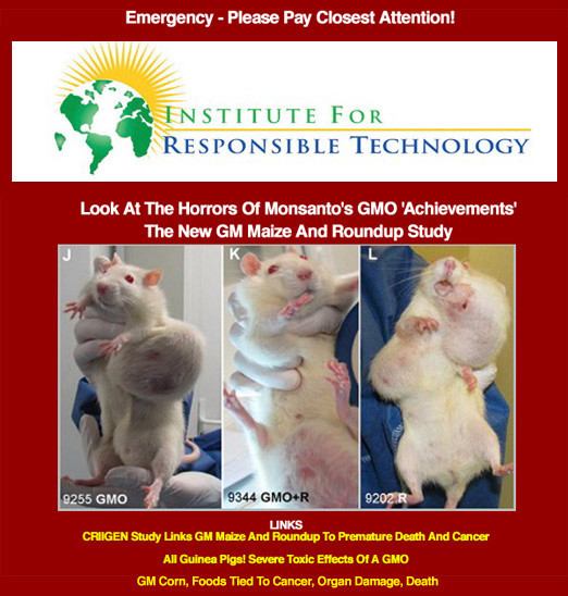GMO effects humans exposed on video shows rats with large tumors