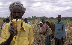 Africa pushes for genetically modified food ban