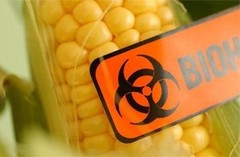 Peru bans all genetically modified foods